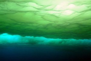 What is Marine Phytoplankton ?