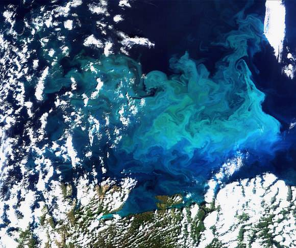 Earth from Space and the Plankton Bloom looks like a work of art !