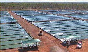growing spirulina 100% australian