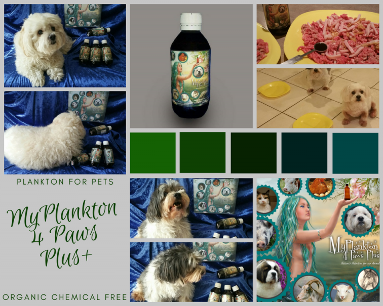 phytoplankton for pets, plankton for animals, plankton for pets