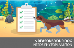 Why your dog needs phytoplankton