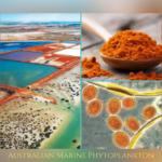 Australian Marine Phytoplankton