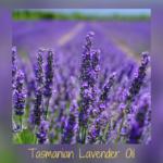 Tamanian Lavender